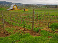 Bergstrom Winery.jpg