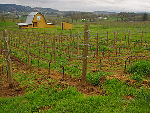 The Bergström Winery in Oregon's Willamette Va...