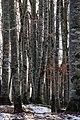 Berngat im Plättelenwald 4.JPG