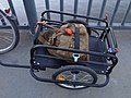 Bicycle Trailer with Czech Army Rucksack.jpg
