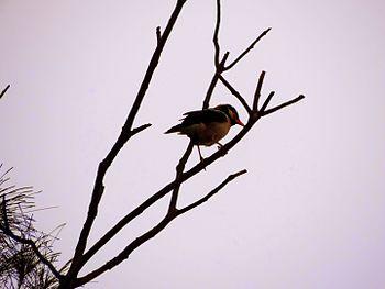 Birds - Sudipta.Chakraborty.jpg