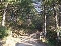 Bivio per il poggio Ranchetto e i Giglioni - panoramio.jpg