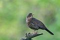 Blackbird Lodz(Poland)(js)06.jpg