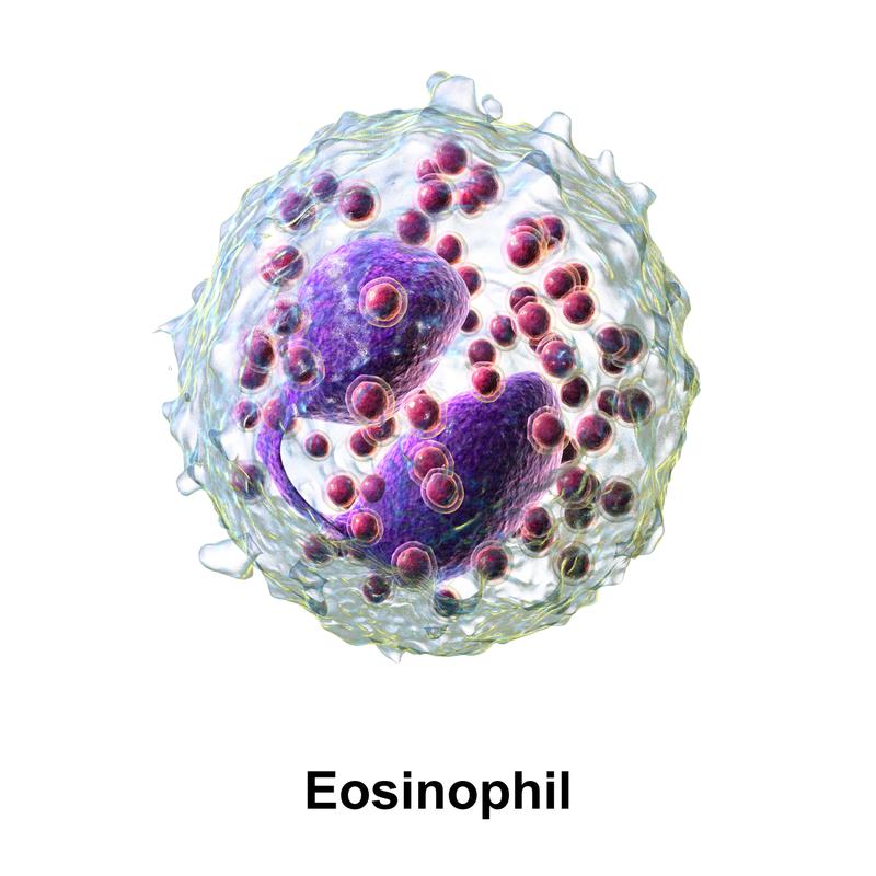 Animación 3D de un eosinófilo