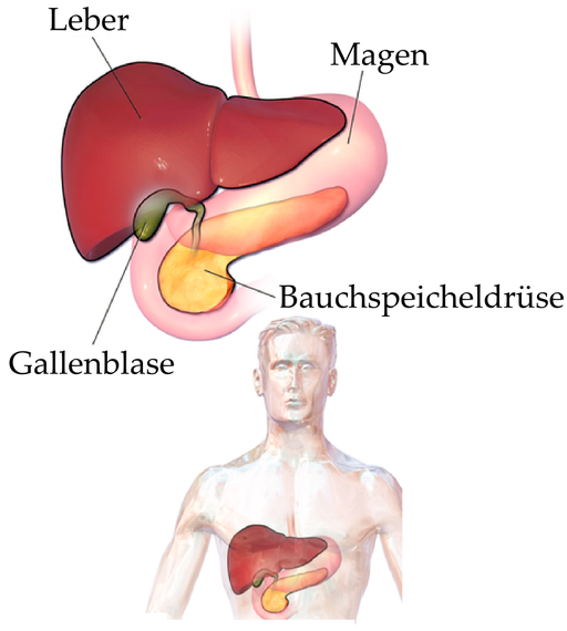 Blausen 0428 Gallbladder-Liver-Pancreas Location-de