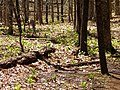 Blood Mtn, Appalachian Trial - panoramio.jpg