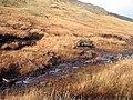 Bog Pine to the East of Beinn a Chreachain - geograph.org.uk - 1575290.jpg
