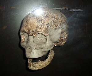 Border Cave - Adult human skull found in Border Cave