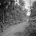 Boslandcreolen slepen in het Marowijnegebied de gekapte bomen uit het oerwoud, Bestanddeelnr 252-6822.jpg
