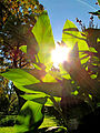 Botanička bašta Jevremovac, Beograd - jesenje boje, svetlost i senke 21.jpg