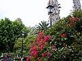 Bougainvillea San Luis Potosi Mexico - panoramio.jpg