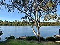 Brisbane River seen from Chelmer, Queensland 02.jpg