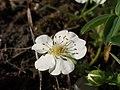 Brzke jaro - spidlaky - prirodni rezervace - 02.jpg