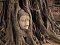 Buddha Head in Tree.jpg