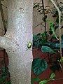 Bug @ Garden.jpg
