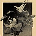 Bulbs and seeds for fall 1936 (1936) (20232084428).jpg