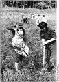 Bundesarchiv Bild 183-1987-0619-001, Wismar, Ausbildung zum Forstfacharbeiter.jpg