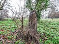 Bushy Park, Dublin -146426 (32605614398).jpg