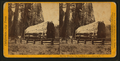 But-end of Big Tree, diam. 25 feet. - Calaveras Co, by John P. Soule 4.png
