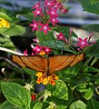 Butterfly Pavilion 8-23 (20753544418).jpg