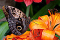Butterfly and Orange Flower.jpg