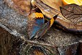 Butterfly at Chester Zoo 12.jpg