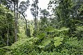 Bwindi Impenetrable National Park 10.jpg