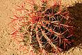 Cactus - close up (6843284534).jpg