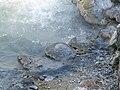 Caldeiras das Furnas EP1040559 (29867528947).jpg