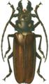 Callipogon relictus.png