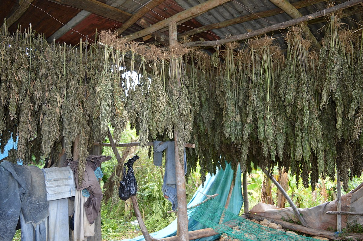 Cannabis smokers dating uk indian