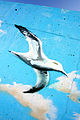 Cantabria. Port of Pedreña. Gull. Graffiti. Spain (2904382487).jpg