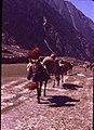 Caravan of horses in Nepal.jpg