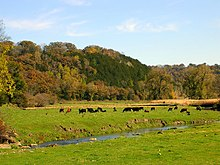 Cattle grazing, Fillmore County, Minnesota.jpg