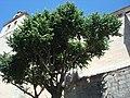 Cebreros - 005 (30067339144).jpg