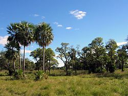 Landscape in the Gran Chaco, Chaco Boreal, Paraguay
