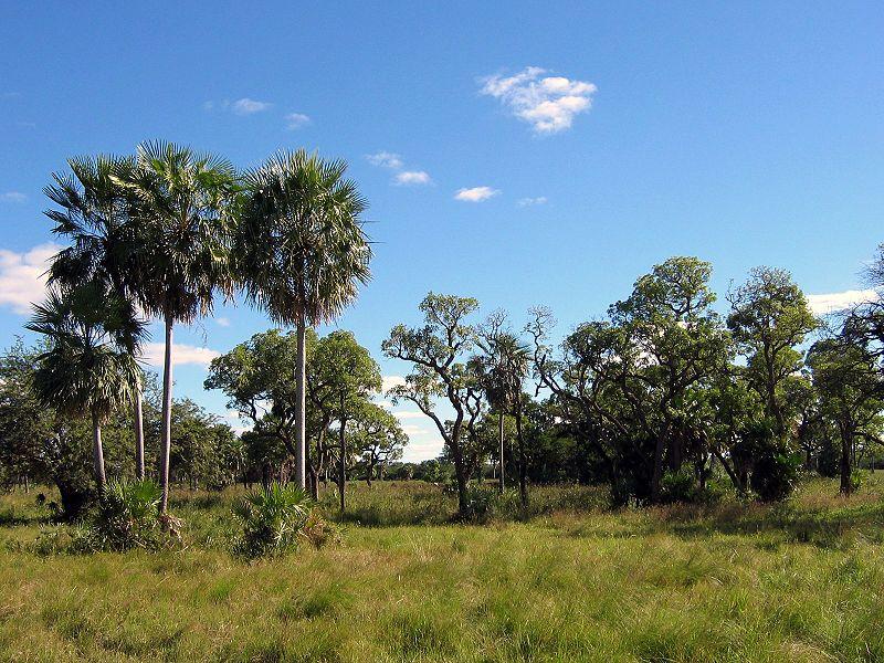 File:Chaco Boreal Paraguay.jpg