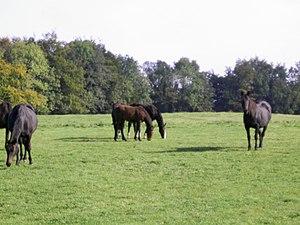 County Westmeath - Barbavilla Stud Horses
