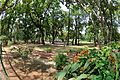 Chhatimtala - South-eastern View - Santiniketan 2014-06-28 5231.JPG