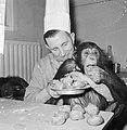 Chimpansees Tilly en Hilda uit Artis eten oliebollen, Bestanddeelnr 918-6181.jpg