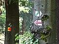 Choceň, turistické značky u Hlavačova.jpg