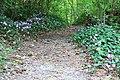 Ciclamini nel bosco -Senerchia - Oasi naturale Valle della Caccia -Avellino 19.jpg