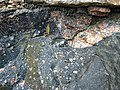 Clast-rich impact pseudotachylite (Sudbury Breccia, Paleoproterozoic, 1.85 Ga; Windy Lake Northwest roadcut, Sudbury Impact Structure, Ontario, Canada) 44 (46950470954).jpg