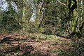 Clearing in woodland - geograph.org.uk - 369857.jpg