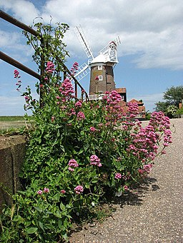 Cley tower mill - geograph.org.uk - 842815