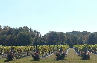 Coda Rossa Winery - The winery has 13 acres of land, of which 10 acres is cultivated with grapes.