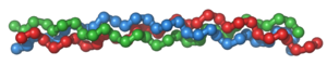 Collagen - Tropocollagen molecule: three left-handed procollagens (red, green, blue) join to form a right-handed triple helical tropocollagen.