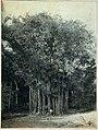 Collectie Nationaal Museum van Wereldculturen TM-60062318 Man poseert bij een grote bamboe Trinidad fotograaf niet bekend.jpg