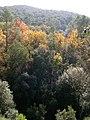 Collserola prop de Sant Cugat DSCN0194.jpg