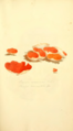 Coloured Figures of English Fungi or Mushrooms - t. 78.png